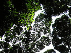 NERC and FAPESP announce programme on Human Modified Tropical Forests